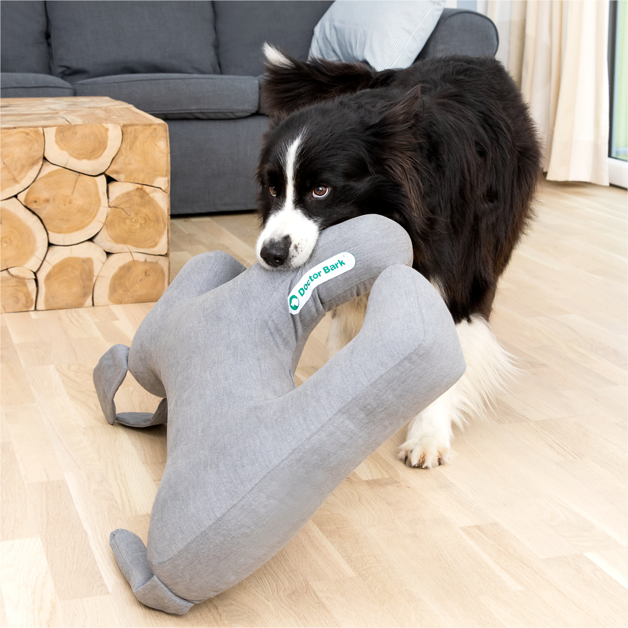 Toy Dog hellgrau