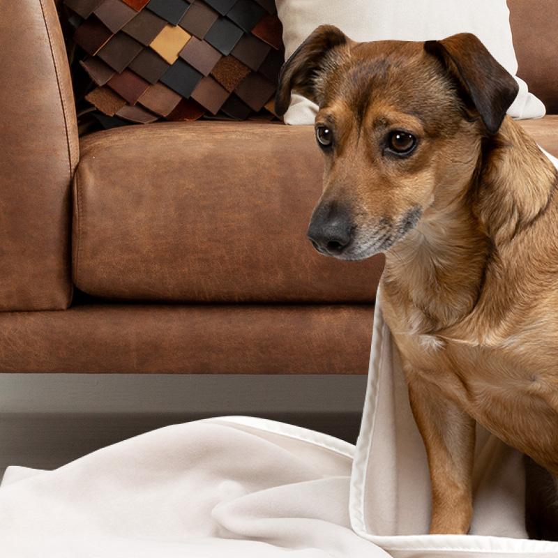 Doctor Bark - Hundedecken - waschbar bei 95°C