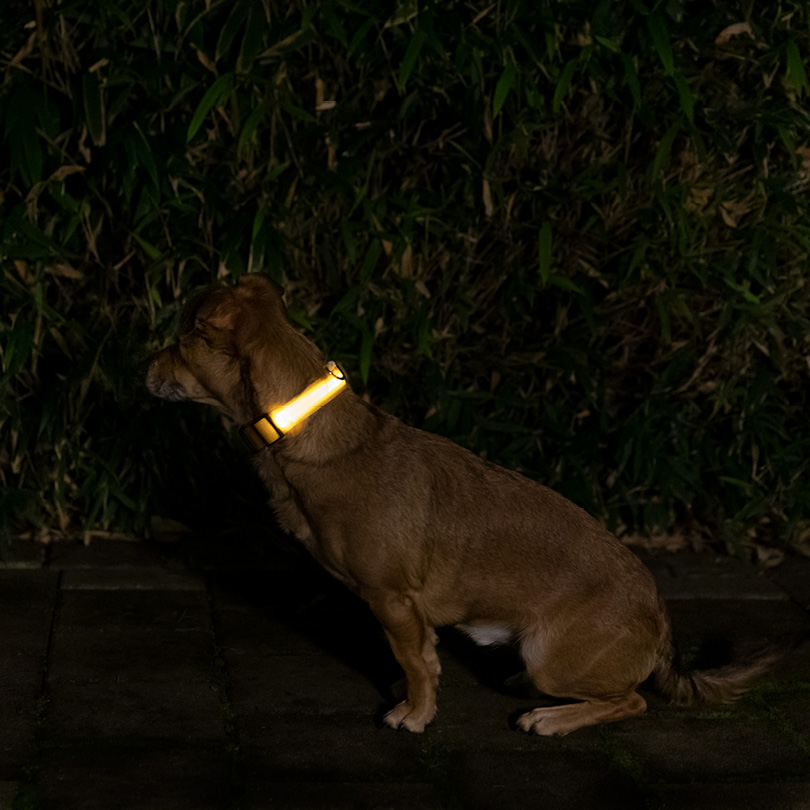 Leuchthalsband S gelb