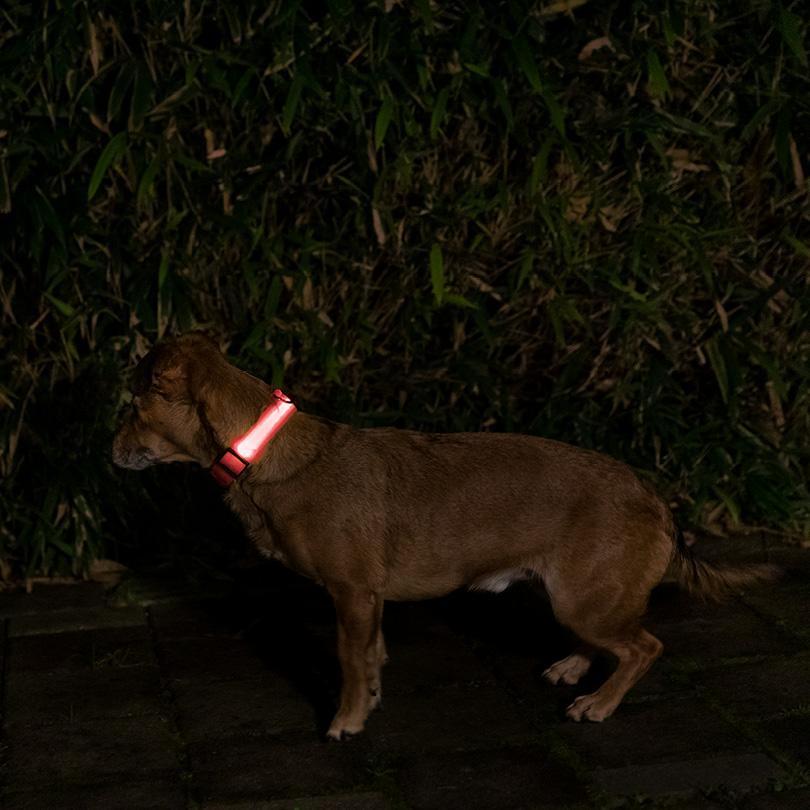 Leuchthalsband L rot