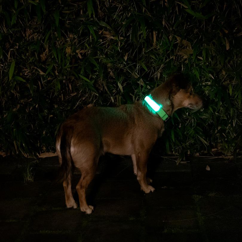 Leuchthalsband XL grün