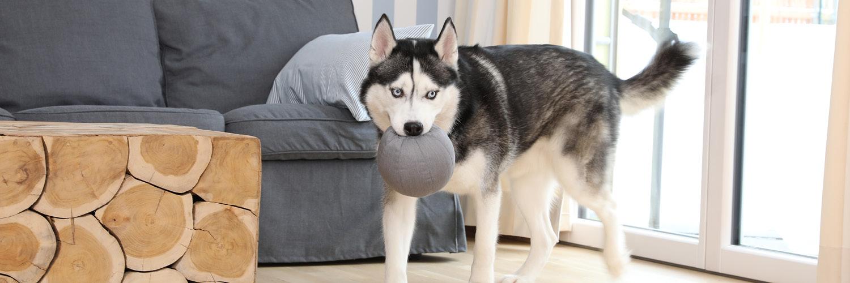 Doctor Bark - Hundespielzeug Toy Ball - waschbar bei 95°C