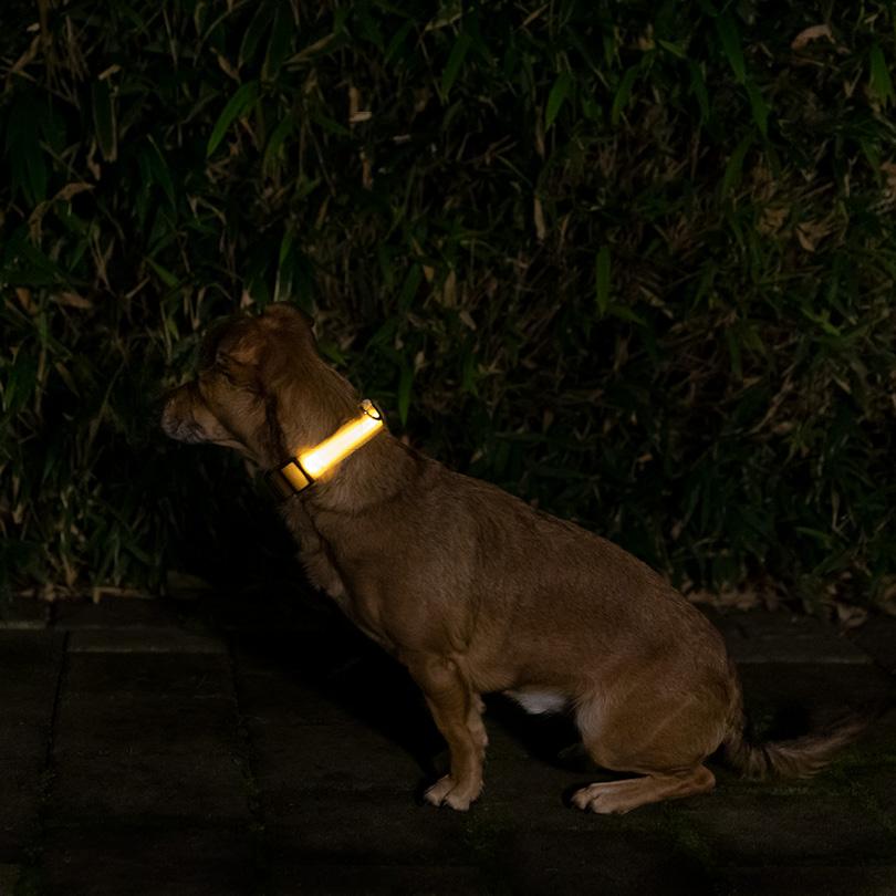 Leuchthalsband L gelb